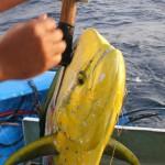 Pesca.